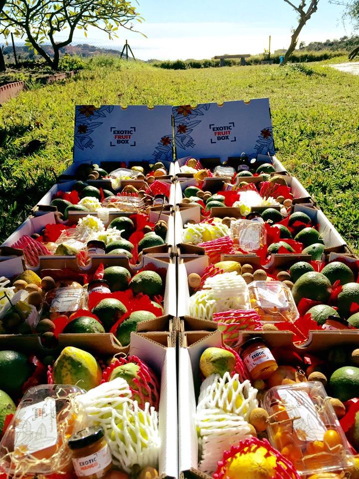 Recolección fruta en la Finca La Tropicana