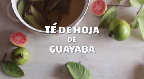 té de hoja de guayaba