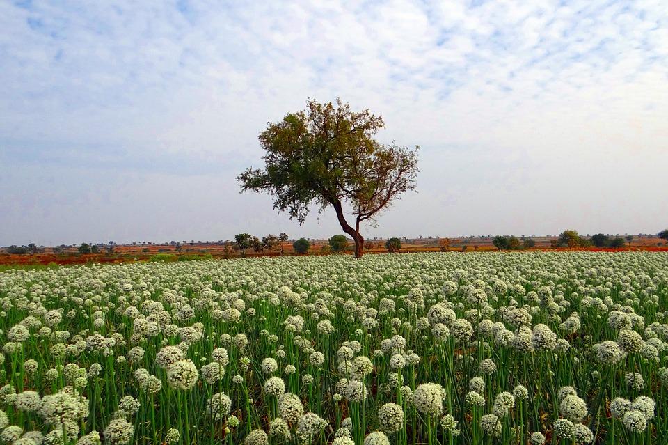 cultivo de flores en la India