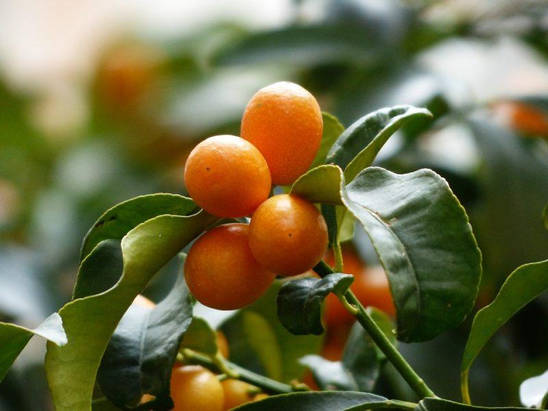 ensaladas detox con frutas tropicales