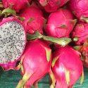 Rote Drachenfrucht