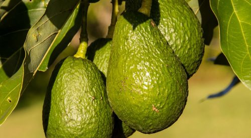 aguacate exotic fruit box