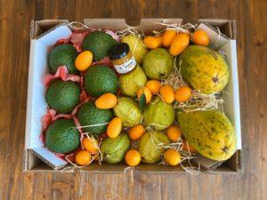 aliento jugoso con olor a fruta y diabetes